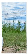 Summer Sea Gull Bath Towel