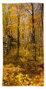 Sun Dappled Autumn Forest  Hand Towel