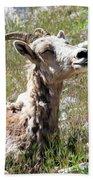 Sunbathing Mountain Sheep Bath Towel