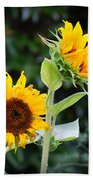 Sunflower Duo Bath Towel