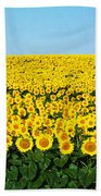 Sunflower Field, North Dakota, Usa Bath Towel