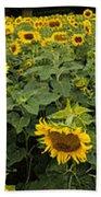 Sunflowers Panorama Bath Towel