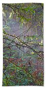 Sunlight Highlights In Armstrong Redwoods State Preserve Near Guerneville-ca Bath Towel
