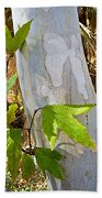 Sunlit Sycamore Leaves In Andreas Canyon In Indian Canyons-ca Bath Towel