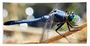 Sunning Blue Dragonfly Square Bath Towel