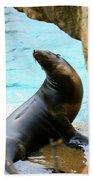 Sunning Sea Lion Bath Towel