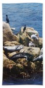 Sunning Seals Bath Towel