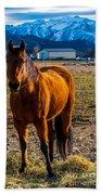 Sunset Bay Horse Heber Valley Utah Bath Towel
