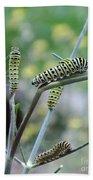 Swallowtail Caterpillars On Dillweed Bath Towel