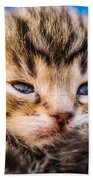 Sweet Small Kitten  Bath Towel