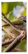Tailor Bird Hand Towel