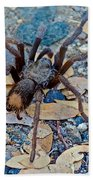 Tarantula Spider In Park Sierra Near Coarsegold-california Bath Towel