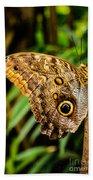 Tawny Owl Butterfly Bath Towel