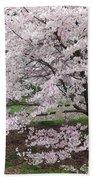 The Arboretum Cherry Blossoms Bath Towel