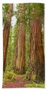The Beautiful And Massive Giant Redwoods Sequoia Sempervirens In Redwood National Park. Bath Towel by Jamie Pham
