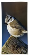The Crested Tit In The Sun Bath Towel