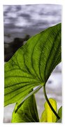 The Leaf Of A Water Plant Bath Towel