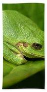 The Little Frog Bath Towel