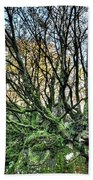 The Mossy Creatures Of The  Old Beech Forest 8 Bath Towel