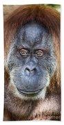 The Orangutan Album V4 Bath Towel