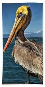 The Pelican Of Oceanside Pier Bath Towel