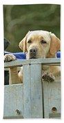 Three Kinds Of Labradors Bath Towel