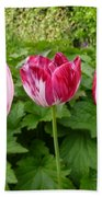 Three Pink Rembrandt Tulips Bath Towel