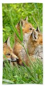 Three Red Fox Pups Bath Towel