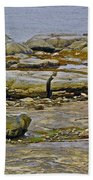 Thrombolites Up Close In Flower's Cove-nl Bath Towel