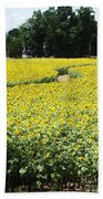 Through The Sunflowers Hand Towel