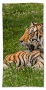 Tiger At Rest 3 Bath Towel