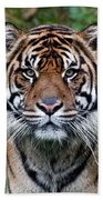 Tiger Stripes Bath Towel