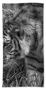 Tiger Stalking In Black And White Bath Towel