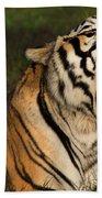 Tiger Teeth Bath Towel