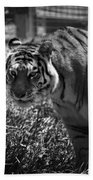 Tiger With A Cold Stare Bath Towel