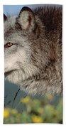 Timber Wolf Adult Portrait North America Bath Towel