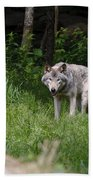 Timber Wolf In Forest Bath Towel