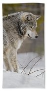 Timber Wolf In Snow Bath Towel