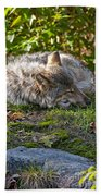 Timber Wolf Pictures 42 Bath Towel