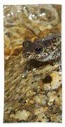 Torrent Treefrog Aka Waterfall Frog Bath Towel