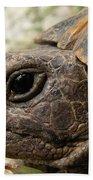 Tortoise Portrait In Macro Bath Towel