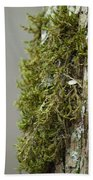 Tree Moss Closeup 2013 Bath Towel