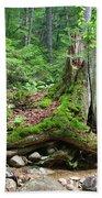 Tree Stump - White Mountains New Hampshire Bath Towel
