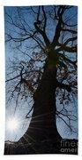 Tree With Sun Bath Towel