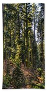 Trees With Moss In The Forest Bath Towel
