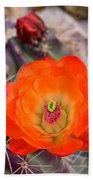 Trichocereus Cactus Flower  Bath Towel