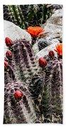 Trichocereus Cactus Flowers Bath Towel