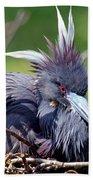 Tricolored Heron Female Incubating Eggs Bath Towel