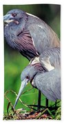 Tricolored Heron Male And Female At Nest Bath Towel