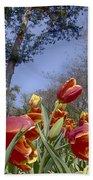 Tulips At Dallas Arboretum V37 Bath Towel